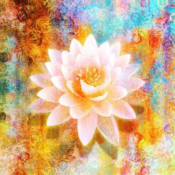 Senzitivnost je kot nežni, komaj razcveteli lotusov cvet. slika: Jaison Cianelli